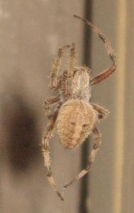 Spider by Vinnie Tangredi